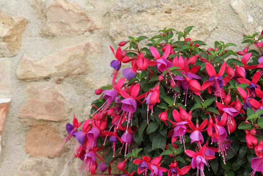 Blumen Eichentopf Sortiment